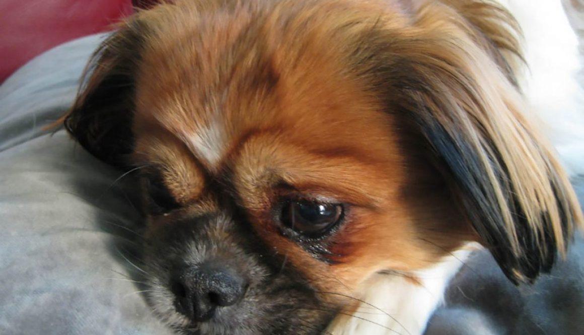 Meet Pug